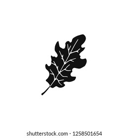 Black oak leaf vector doodle draw, isolated on white