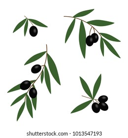 black olives branches with green leaves oil icon set vector.