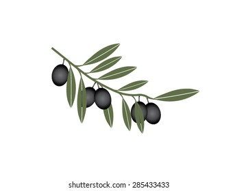 Black olives set for agriculture or idea of logo