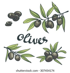 Black olives. Vector illustration.