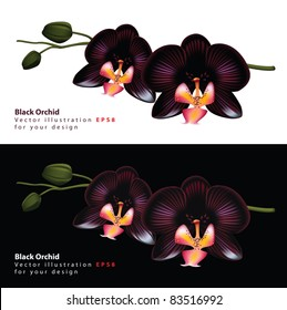 Black orchid isolated on a white and black background. Vector illustration.
