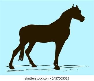 black painted silhouette horse on 260nw