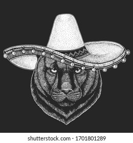 Black panther, puma. Sombrero is traditional mexican hat. Mexico. Head of animal. Wild cat portrait.