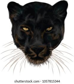 Black Panther- vector art