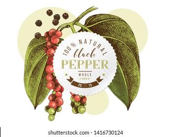 Black pepper emblem over hand drawn pepper plant. Vector illustration