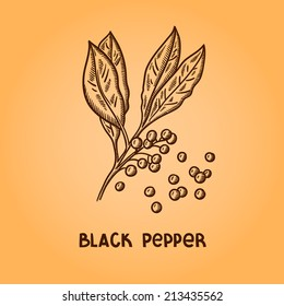 Black pepper. Natural spices. Compilation of vector sketches. Kitchen herbs and spice. Vintage style. Hand drawn.