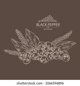 Black pepper: plant, pepper and leaves. Vector hand drawn illustration.