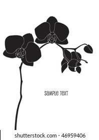 black phalaenopsis orchid vector illustration