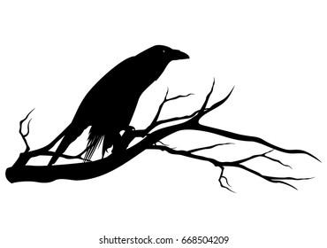 black raven bird sitting on tree branch - halloween theme vector silhouette design