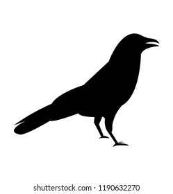 Black raven crow silhouette, isolated on white background