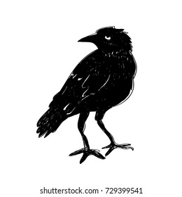 Black raven isolated on white background. Hand drawn crow. characters Halloween. Vector illustration