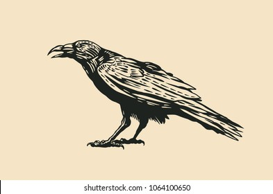 Black Raven. vector illustration