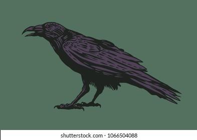 Black Raven. vector illustration