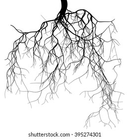 Black root system - vector set