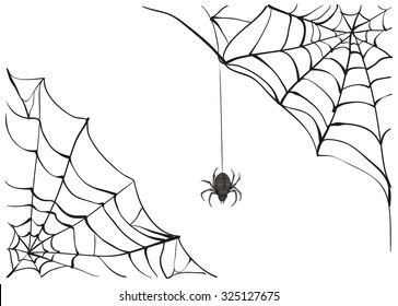 Black scary spider of web. Illustration in vector format