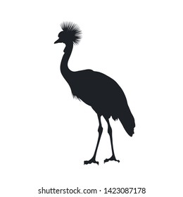 Black silhouette of african grey crowned crane on white background. Isolated bird icon. Wild animals of Africa. Savannah nature. Desert wildlife. Vector illustration