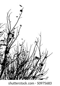 Black silhouette of autumn leafless branches of trees on white background