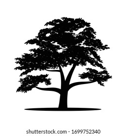 Black silhouette of a big tree on a white background. Vector image.