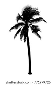 black silhouette coconut tree, isolated natural plant sign, vector illustration
