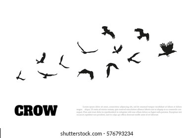Black silhouette of a crow on a white background. Raven isolated. Vector illustration