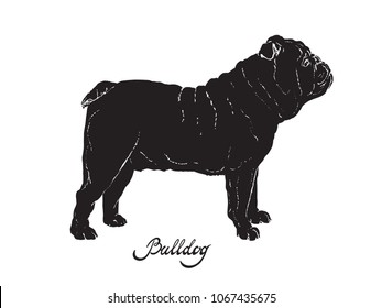 Black silhouette of dog English Bulldog on a white background with the signature