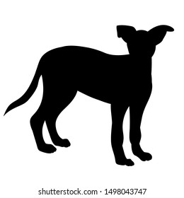 black silhouette of a dog standing