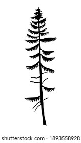 Black silhouette of fir-tree. Hight black pine. Simple tree icon. Nature concept. Pine tree with needles isolated at white background. Decorative element. Plant shadow. Vector illustration