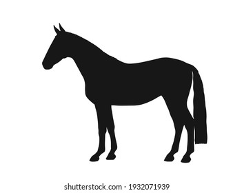 Black silhouette of a horse. Body silhouettes for designer