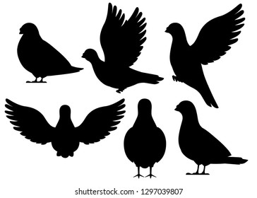 Black silhouette. Icon set of Pigeon bird flying and sitting. Flat cartoon character design. Black bird icon. Cute pigeon template. Vector illustration isolated on white background.