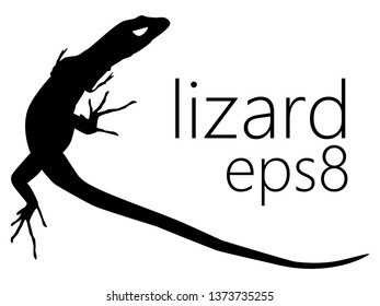 Black silhouette of Italian wall lizard or ruin lizard (Podarcis siculus), with long thin fingers and longer tail - top view. Vector shape, graphic resource, eps 8.