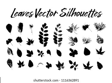 Black silhouette with leaf of rowan or sorb, ginkgo and maple, hop and thuja, aspen and birch, hornbeam and blackberry, poplar. Prints of leaves on twig or stem, branch. Flora and nature theme