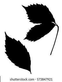 Black silhouette of leaves on a white background.