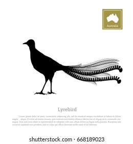 Black silhouette of lyrebird on white background. Animals of Australia. Vector illustration