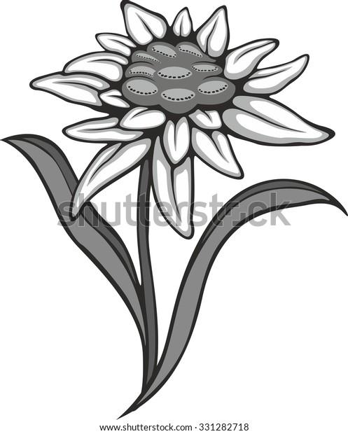 Edelweiß und Alpenblumen Stock-Vektorgrafik (Lizenzfrei) 1156892335