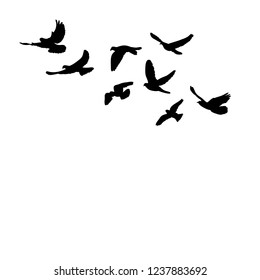 black silhouette of pigeons fly