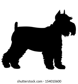 A black silhouette of a Schnauzer standing