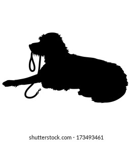 A black silhouette of a shaggy dog lying down with his leash in his mouth waiting to go for a walk