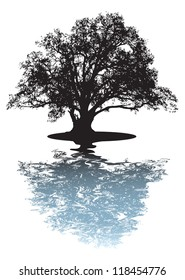 Black silhouette of single beautiful big oak tree with reflection isolated on a white background. Vector.