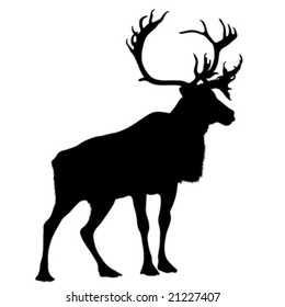 black silhouette stag on white background