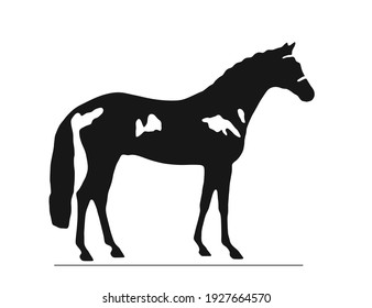Black silhouette of a stallion isolated on white