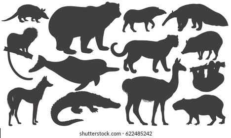 Black silhouettes animals of South America on white background set. Vector illustration art. Bear, battleship, tamarin, wolf, dolphin, lama, jaguar, anteater, peccary, sloth, tapir, capybara, caiman.