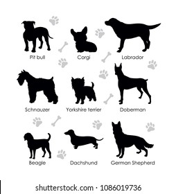 Black silhouettes of dogs on a white background. Schnauzer, Pit bull, Beagle, Dachshund, German Shepherd, Corgi, Yorkshire terrier, Labrador, Doberman. Set of vector illustration.