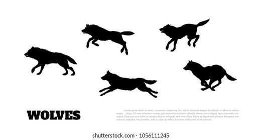 Black silhouettes of flock of wolves on a white background.  Running predators. Forest animals. Vector illustration