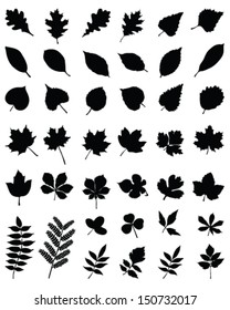 Black silhouettes of foliage-vector