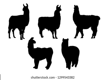 Black silhouettes of lama in different poses isolated on white background. Wild and domestic animals. Vector realistic illustrations