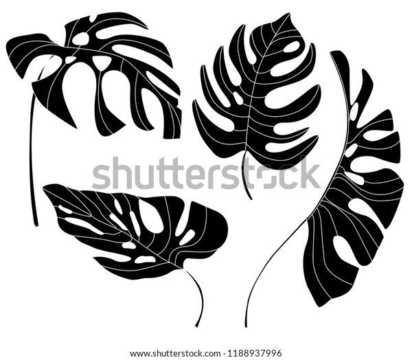 Black Silhouettes Monstera Leaves Vector Set Stock Vector Royalty Free 1188937996 Pngtree offers tropical leaves png and vector images, as well as transparant background tropical leaves clipart images and psd files. https www shutterstock com image vector black silhouettes monstera leaves vector set 1188937996