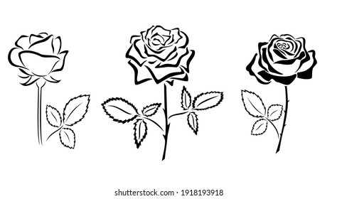 black silhouettes of roses - vector