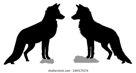 Black silhouettes of two red foxes (Vulpes vulpes). Slightly different vector shapes of two wild vixen from the side/profile, standing tall on a rock and looking forward.