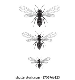 Black sketch of a wasp on the white background