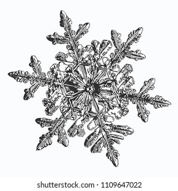 Black snowflake on white background. This vector illustration based on macro photo of real snow crystal: small stellar dendrite with fine hexagonal symmetry, complex ornate shape and six elegant arms.